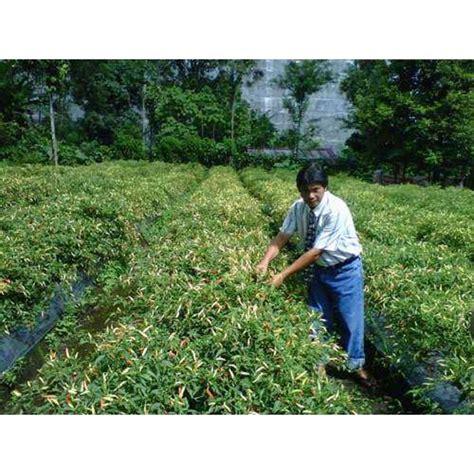 Pupuk Bunga Cabai jual pupuk organik tanaman cabai berubah setiap ruas oleh