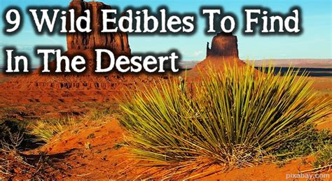 desert plants the ultimate survivors 9 edibles to find in the desert the prepper dome