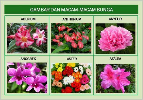 jenis bunga gallery