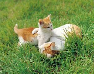 Strutture Per Gatti by Come Struttura In Pvc All Aperto Per I Gatti
