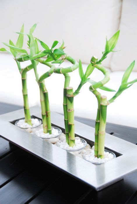 Indoor Modern Planters lucky bamboo table arrangement plant decor toronto s