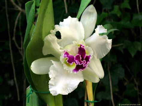 imagenes de flores hermosas orquideas fotos de flores orquideas