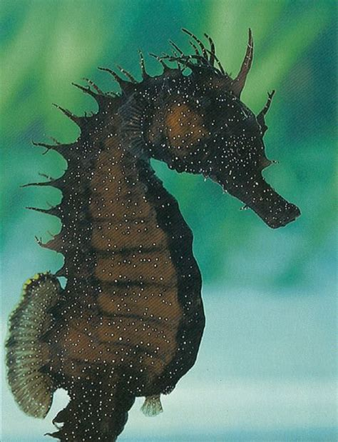 imagenes animales acuaticos imagenes animales acuaticos taringa animales