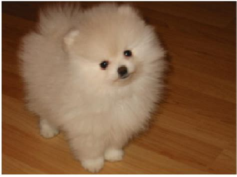 pictures of the cutest puppies in the world most cutest puppies in the world breeds picture