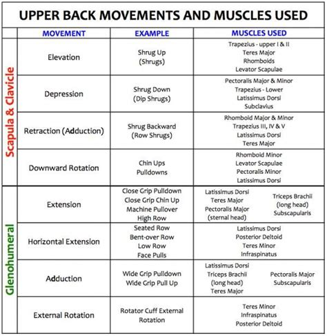bench press muscles and joints used 25 best ideas about shoulder joint on pinterest