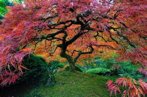 colorful trees landscape trees colors nature colorful cherry blossom tree
