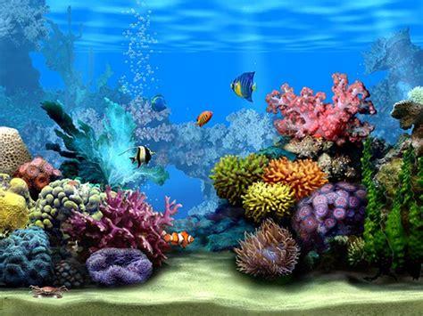 233 cran de veille d aquarium gratuit pour ordinateur 224 telecharger