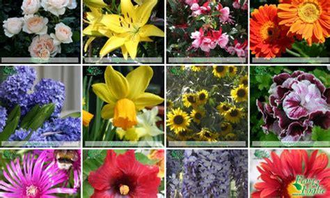 elenco nomi dei fiori riconoscere i fiori ecco la gallery di fiori foglie