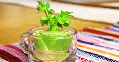 8 vegetables you can regrow 7 vegetables that you can regrow again and again great