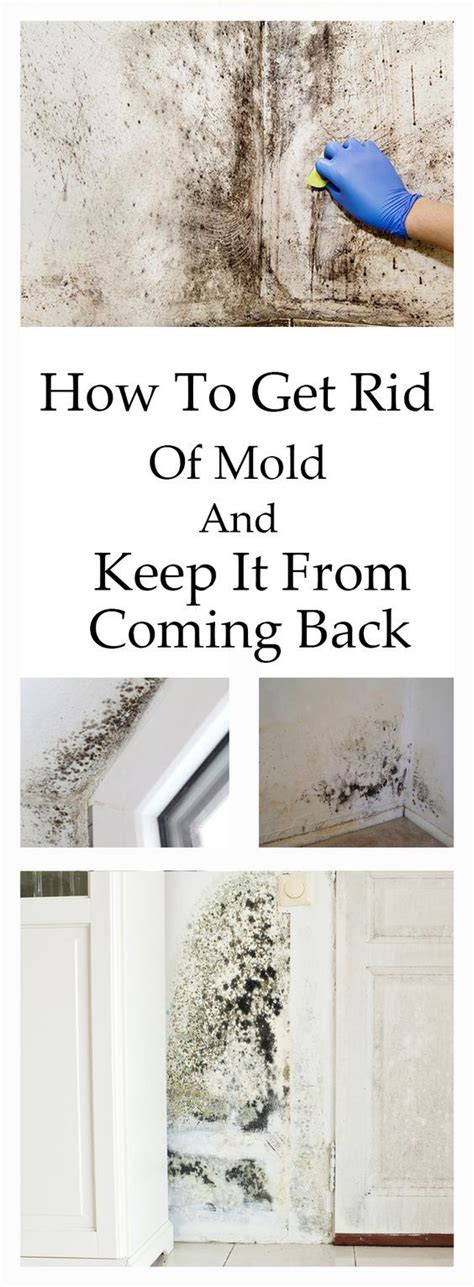 21 best home mold yuk images on pinterest cleaning