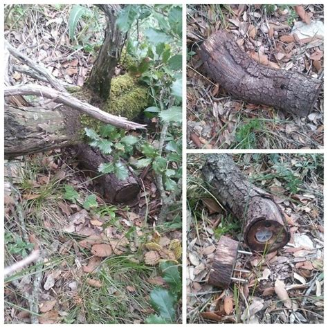 Toughspot Mba Internship by 17 Best Images About Hollow Log Geocaches On