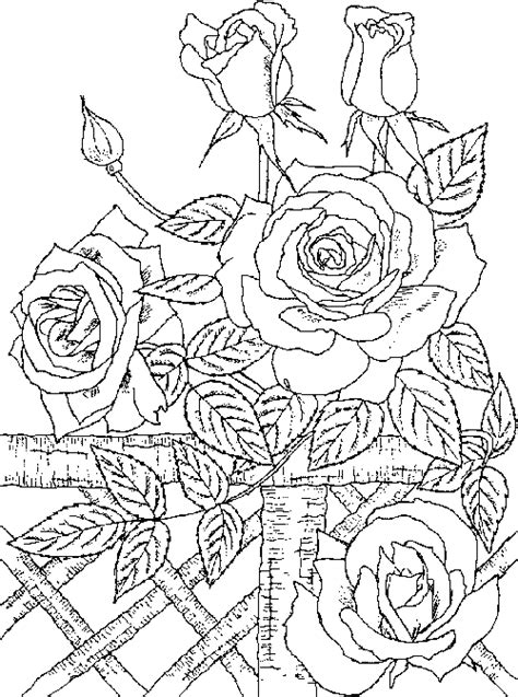 rose coloring pages for adults coloring pages for kids