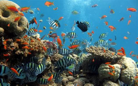 imagenes de ecosistemas faciles para dibujar 10 caracter 237 sticas de los ecosistemas