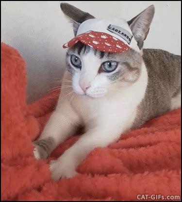 Kater Milchtritt Decke by Einigen Katzen Sieht Das Auch An Anderen Ist Das