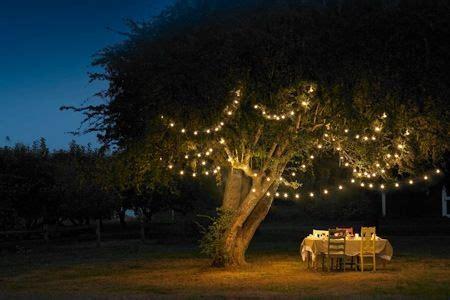 installation of fairy lights in trees lights adelaide midnight garden goddess lights lighting and solar