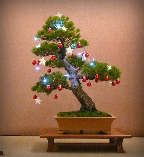 453 best images about great bonsai trees on pinterest