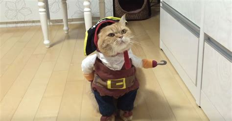 pirate cat  coming  swashbuckle  halloween candy