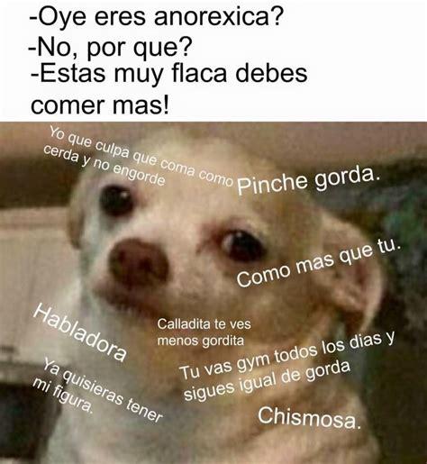 Memes De Chihuahua - m 225 s de 1000 ideas sobre chihuahua meme en pinterest gato