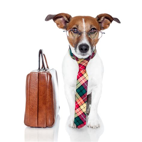 how to working dogs take your to work day
