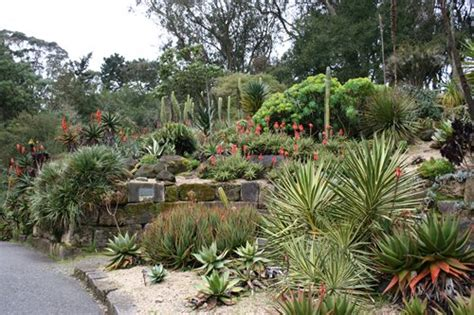 Sf Botanical Garden Map Visit The San Francisco Botanical Garden Landscaping Network