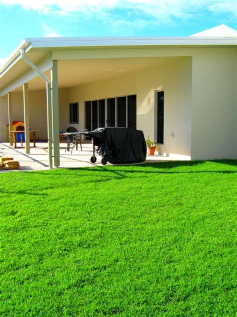 blue couch turf brisbane queensland blue couch from coastal turf