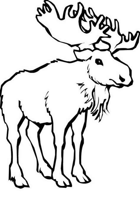 coloring pages canadian animals free coloring pages of canada day
