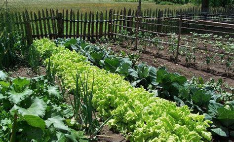 backyard organic farming organic and sustainable farming