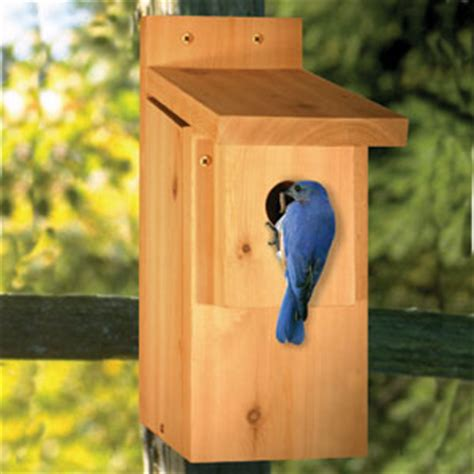 bluebird bird house plans bird house plans for bluebirds home design and style