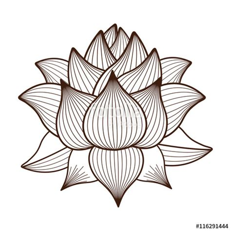 lotus flower drawing images quot lotus flower drawing isolated icon design vector