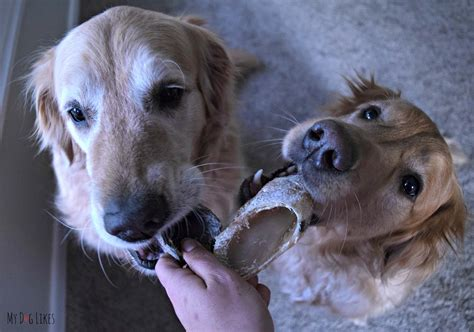cow hooves for dogs single ingredient treats and chews from best bully sticks