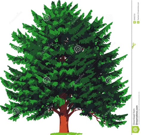 yew tree vector stock photos image 20002753