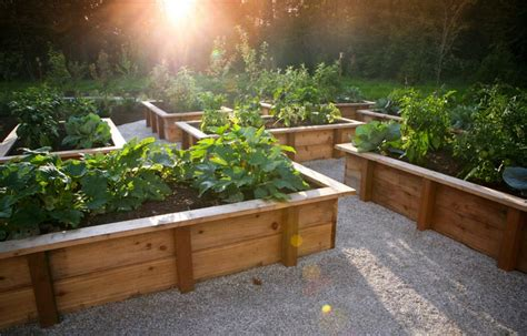 Vegetable Gardening With Raised Beds Quiet Corner How To Plant A Vegetable Garden In Raised Beds