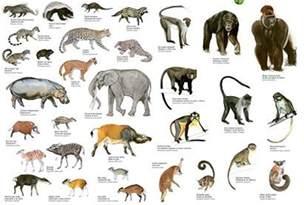 animal zoo mammals endangered mammals list list of