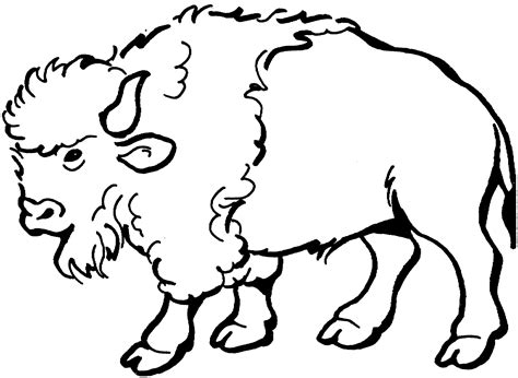 free buffalo and bison coloring pages