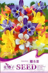 5 kinds columbine aquilegia flower seeds blooming