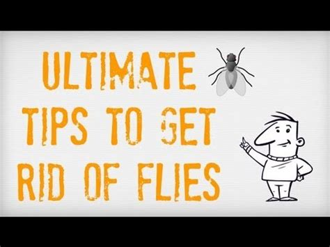 Get Rid Of Flies On Patio by Ultimate Tips On How To Get Rid Of Flies Getting Rid Of