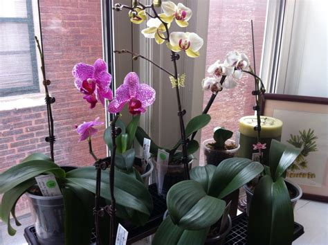 humidity trays my first orchid