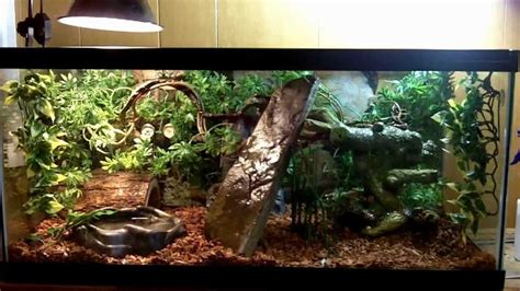 python property decorator setter exle setter decorator python 17 best images about reptiles on