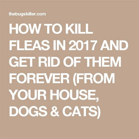 how to get rid of fleas in your bed how to kill fleas in 2017 and get rid of them forever
