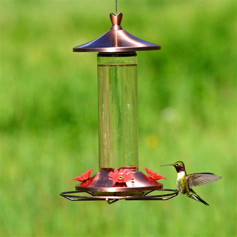 hummingbird feeder recipe feeding the birds