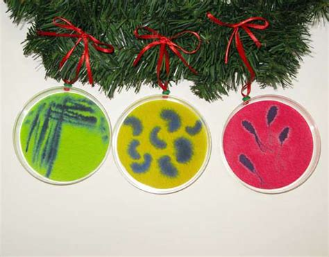seasonal scientific decor petri dish christmas ornaments