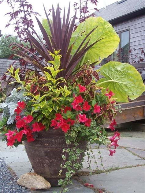 Tropical Planter Ideas by 105 Best Images About Garden Tropical On
