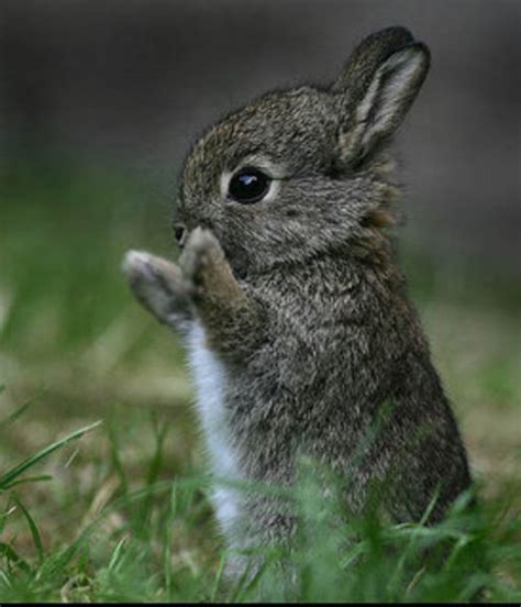 kat on a prim twig isn t this the cutest little bunny