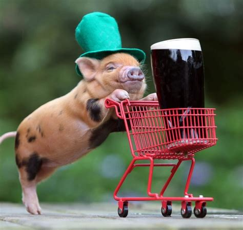 St Silly 10 things you probably didn t about st s day