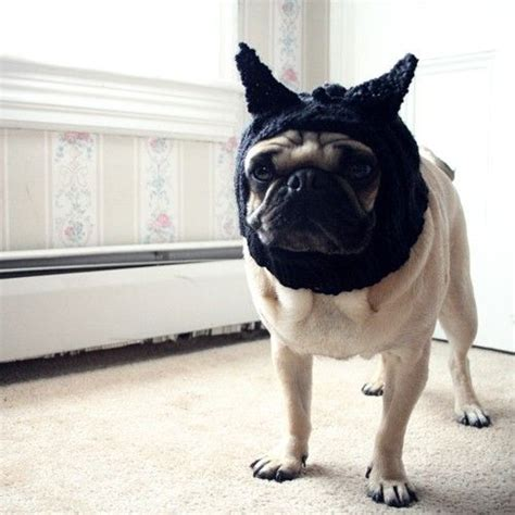 do pugs get on with cats hat black cat hat pug hat hats pet clothing clothing pug
