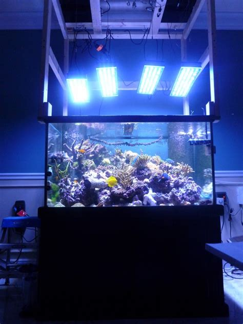 Lu Ultraviolet Untuk Aquarium chooses orphek pr 156 xp orphek