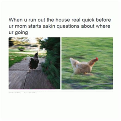 Chicken Running Meme - chicken memes kappit