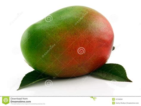 what color is a ripe mango ripe mango fruit with green leafs isolated stock photo