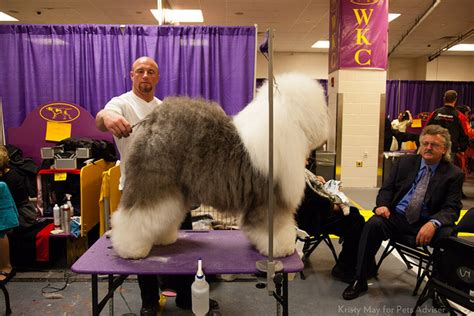 grooming table for dogs best grooming tables for large dogs petful