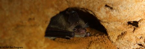 wisconsin bats wi bat program